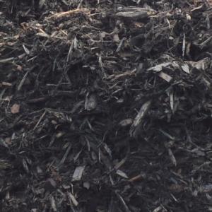 black pine bark